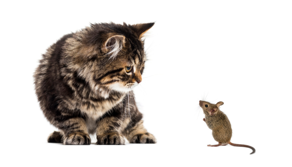 transporteffect kat en muisspel